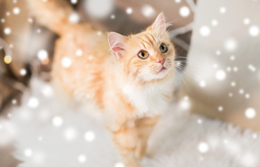 Fototapete - pets, christmas and hygge concept - red tabby cat on sofa with sheepskin at home in winter over snow