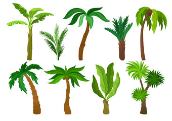 Flat vector set of different kinds of palm trees. Plants with bright green leaves. Natural landscape elements. Jungle flora
