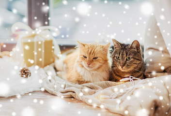 Fototapete - pets, christmas and hygge concept - two cats lying on window sill with blanket and present at home over snow