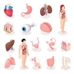 Human Organs Isometric Icons Set