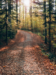 Forest path. Beautiful autumn forest landscape.