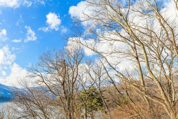 Beautiful  view of Japan autumn  in winter   with blue sky  background, Nagano Prefecture, Japan.