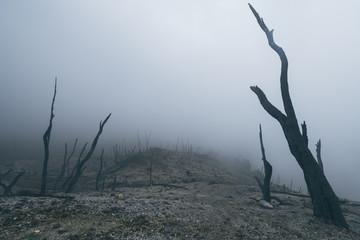 landscape, volcano, forest, dead, mysterious, nature. Indonesia, Java, volcano Fototapete