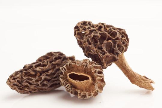 Morel mushrooms on white background macro