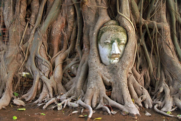 The head of Buddha in Banyan tree, Wat Mahathat, Ayutthaya, Thailand