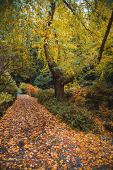 Leaf covered path surrounded by trees and foliage
