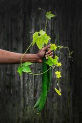 Man holding Chinese okra