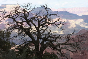 Winter Tree at Grand Canyon's North Rim