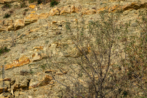 Natural Stones With Graceful Plants On The Mountain Slopes Near The