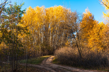 Autumn landscape - road in autumn mixed forest on a bright sunny day