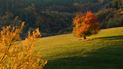 Fall in Slovakia. Meadows and fields landscape with cherry tree near Banska Bystrica. Autumn color trees at sunset.