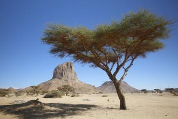 Tree and mountain in Sahara desert