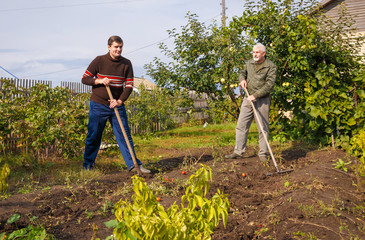 Father and son are engaged in seasonal work in the garden.