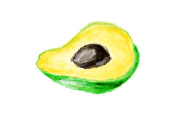 Fresh avocado on white background drawing by watercolor, isolated