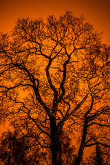 a tree without leaves illuminated by a lantern