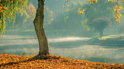 Golden autumn. lone bare tree with fallen leaves on the coast against the background of light morning mist over the water in the morning city park