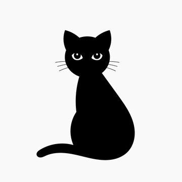 Black cat isolated on white