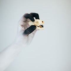 Creepy Halloween monster hand with white and black make up holding little skull in front of white background