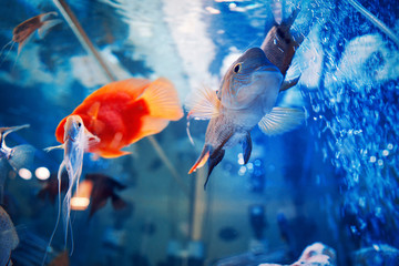 fish in blue water