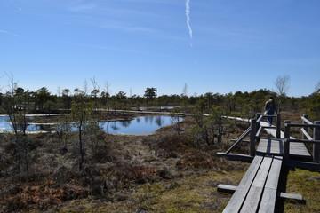 Aluminium Prints Mills Swamps and wildlife.