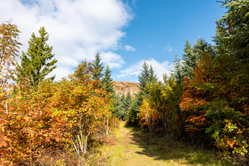 Landscape view of orange foliage autumn fall season, pine tree forest trail hiking path in Iceland Golden Circle, Laugarvatn