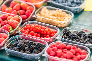 Many plastic containers boxes of berries, white and red currants, blackberries, raspberries and strawberries on display in farmers market