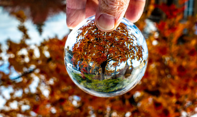 A beautiful Mountain Ash at the apex of its autumn colors through the lens ball.