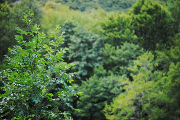 forest green nature background