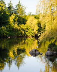 River landscape with trees and water reflections