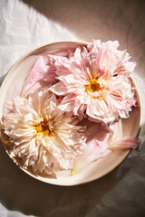 Pink dahlias in bowl
