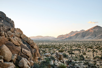The desert at Sunrise in Joshua Tree