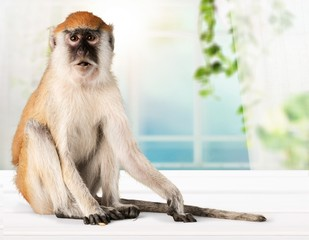 Fotobehang Aap Cute Monkey animal Isolated over white background