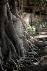 A stone head of Buddha in tree roots at Wat Mahathat temple, Ayutthaya, Thailand.