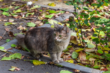 Beautiful fluffy street kitten stands among autumn leaves