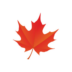 maple leaf logo icon design template vector