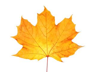 Beautiful autumn leaf on white background. Fall foliage