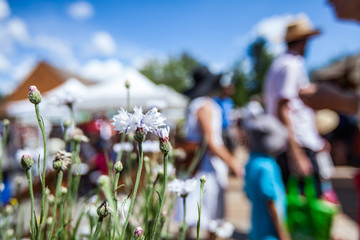 White flowers at the farmer's market with blurry people and food stalls in the background - 1/2 - Closeup picture with vibrant colors, taken outside in a french canadian farmer's market