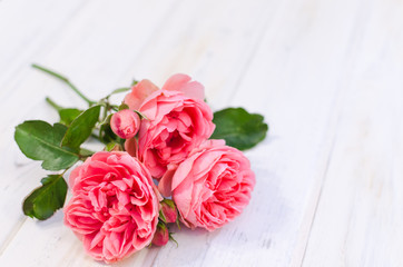 Pink roses over white wooden board. Mother's or Valentine's day
