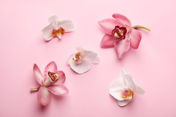 Wall Mural - Beautiful tropical flowers on color background