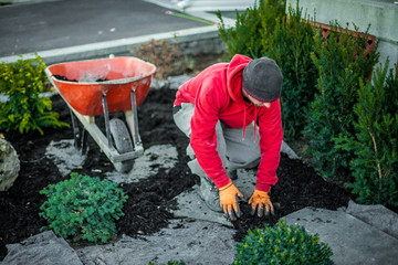 Man with red shirt is placing some mulch on geotextile fabric, around freshly planted shrubs and bushes, near his orange wheelbarrow