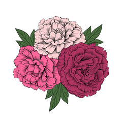 Hand drawn vector peony flowers on white background