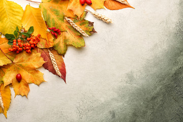 Wall Mural - Composition with autumn leaves on color background
