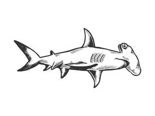 Great hammerhead shark fish animal engraving vector illustration. Scratch board style imitation. Black and white hand drawn image.