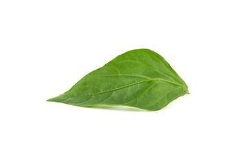 Photo Blinds Condiments Zielony liść na białym tle