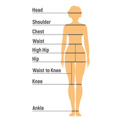 Woman Size Chart. Human front side Silhouette. Isolated on White Background. Vector illustration
