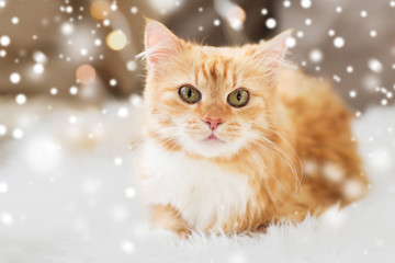 Fototapete - pets, christmas and winter concept - red tabby cat on sofa with sheepskin at home over snow