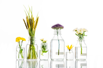 glass jars with blooming flowers isolated on white, alternative medicine concept