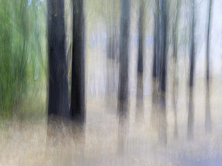 Blurred Tree Trunks At A City Park. Green Leaves. Intentional Camera Movement ICM. Moody Fine Art Design.