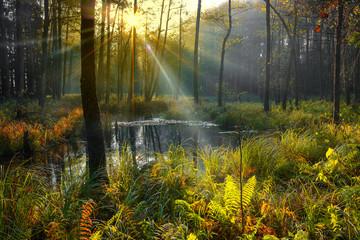 Fototapeta jesień na Mazurach obraz