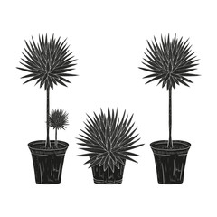 Yucca. Plant. Flowerpot. Black silhouette on white background.